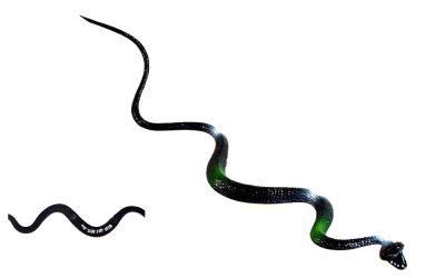 Gummischlange