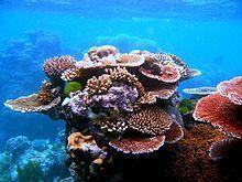 Wunder der Natur Trackable Tag - Great Barrier Reef