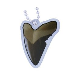 EarthCache™ Fossil Tag- Tooth